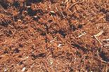 w1200_6202_Soil_Mulch.jpg