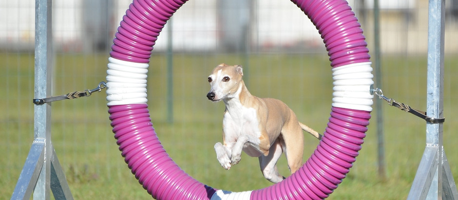 Jumping Through the Hoops of the1031 Tax Free Exchange