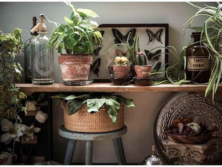 Florestinha urbana: você pode ter uma