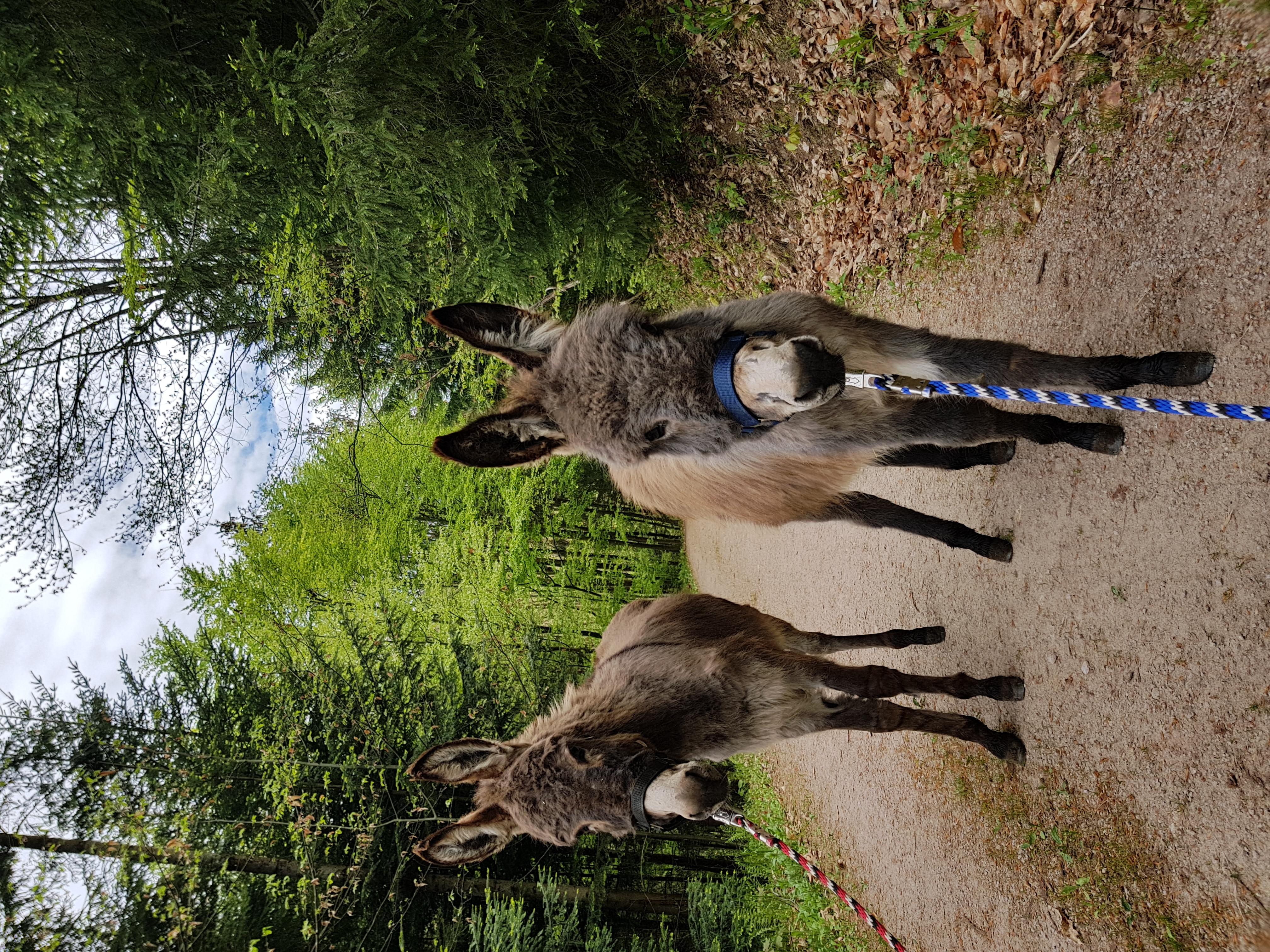 Max und Moritz bei einer Eselwanderung i
