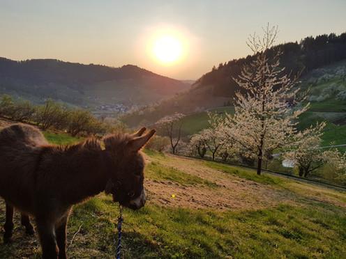 Eseltouren mit Max und Moritz