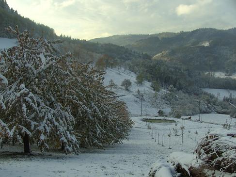 die Winterwunderlandschaft direkt vor Ihrem Fenster
