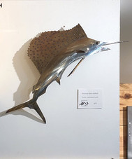 Large Sailfish