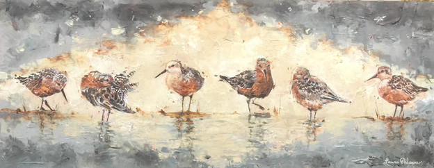 Red Knots I