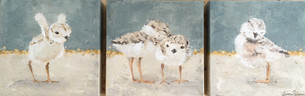 Piping Plovers Triptych