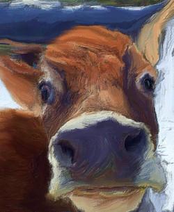 Moo Moo Cow Blues