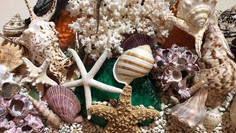 Detail of Shells