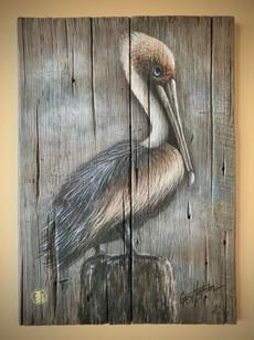 Patient Pelican