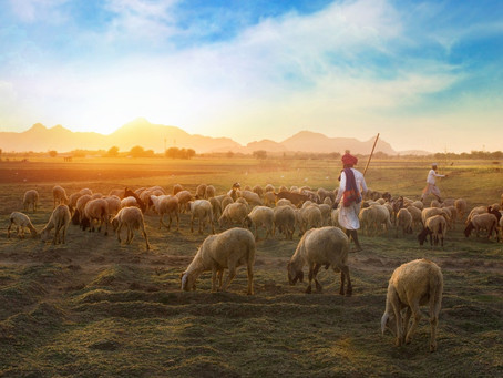 On the Priority of Shepherds