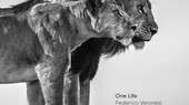 Coming Soon - One Life, Federico Veronesi