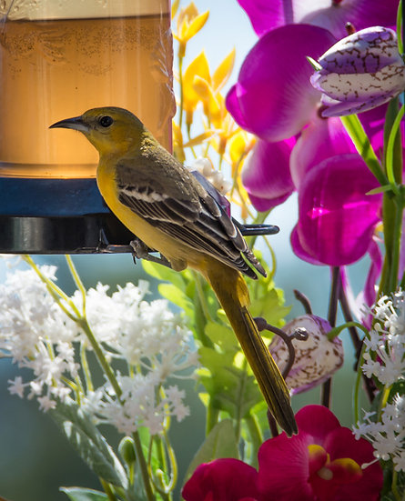 Bird / Pájaro 163