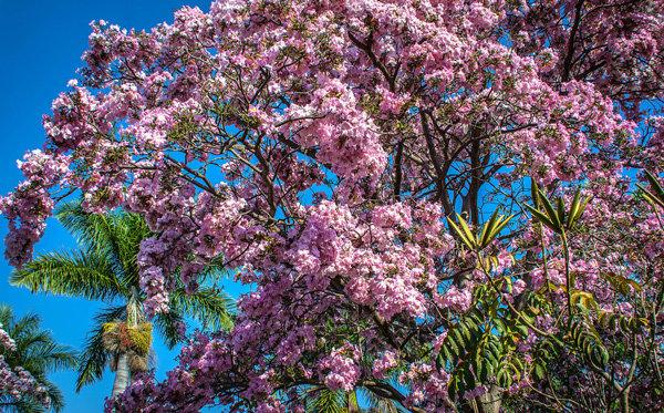 Flowers and blooms in Lake Chapala/ Flores y flores en el lago de Chapala 501-A