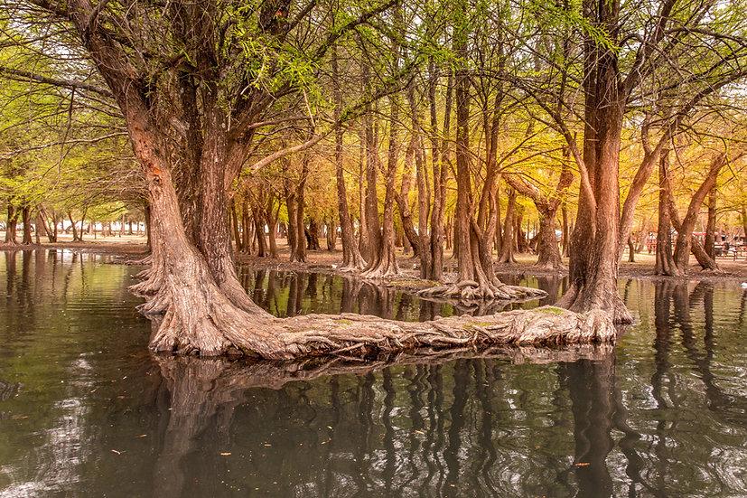 Lago de Camécuaro, Michoacan 10-035