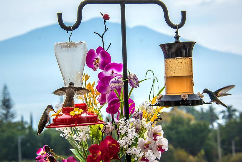 Hummingbirds / Colibris, Mte. Garcia 106