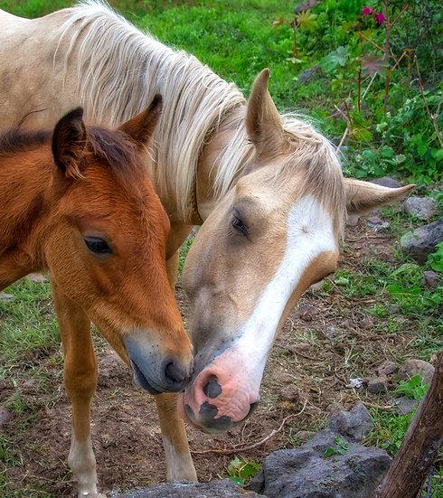 Horses / Caballos 922