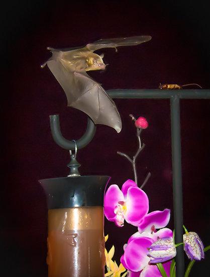 Bat / Bate 164