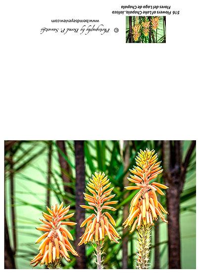 Flowers and blooms in Lake Chapala/ Flores y flores en el lago de Chapala 516