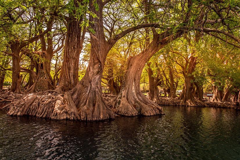 Lago de Camécuaro, Michoacan 10-025