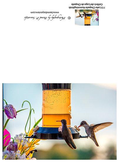 Hummingbirds / Colibris 115