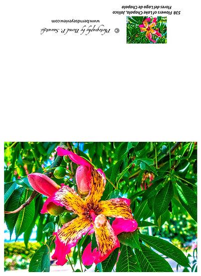 Flowers and blooms in Lake Chapala/ Flores y flores en el lago de Chapala 538