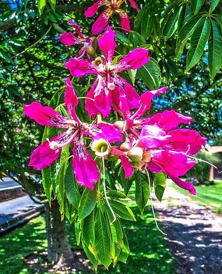 Flowers and blooms in Lake Chapala/ Flores y flores en el lago de Chapala 544