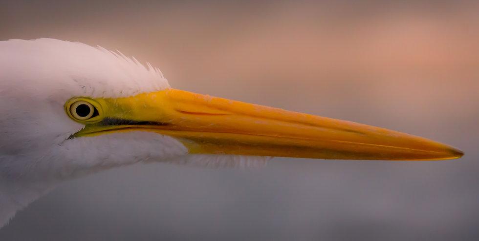 Birds 104A
