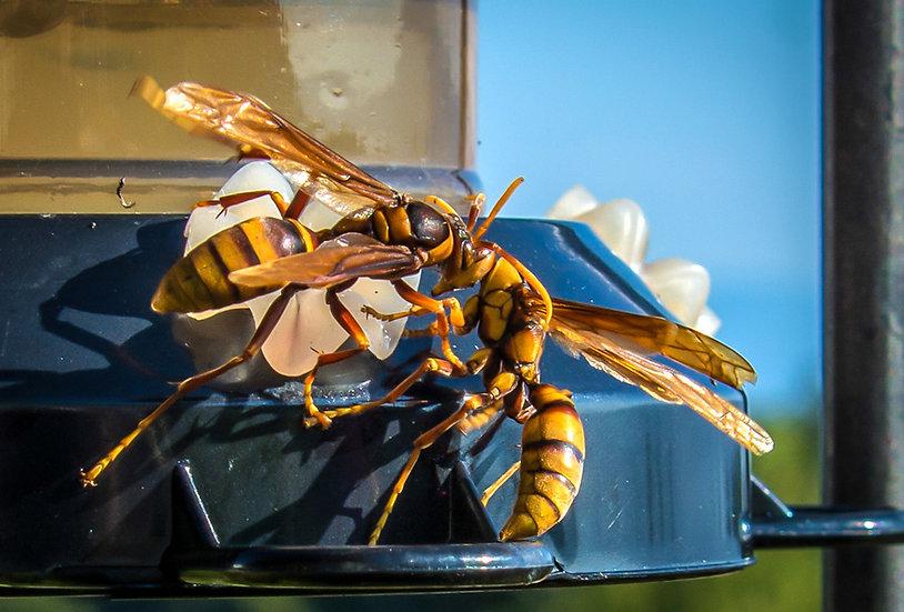 Wasp / Avispa 906