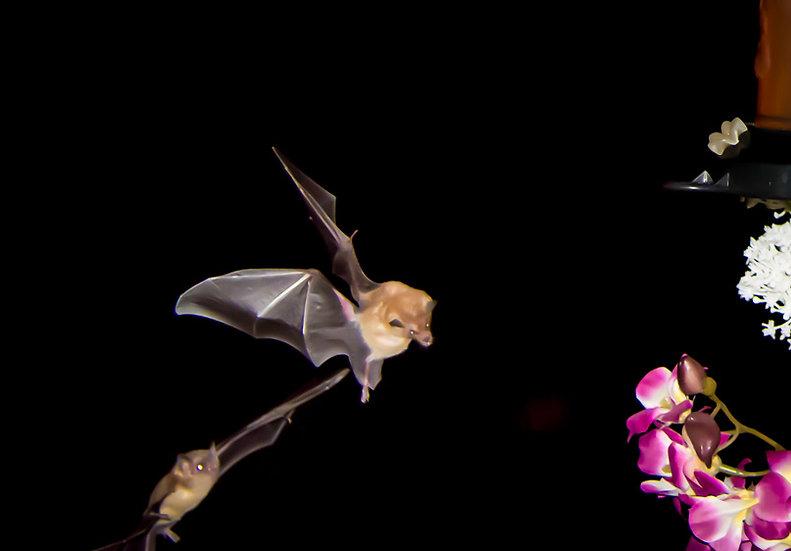 Bat / Bate 165