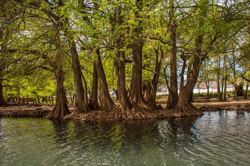 Lago de Camécuaro, Michoacan 10-028