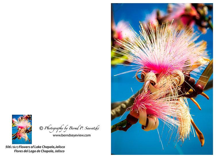 Flowers and blooms, Lake Chapala/ Flores y flores en el lago de Chapala 506-Gc1