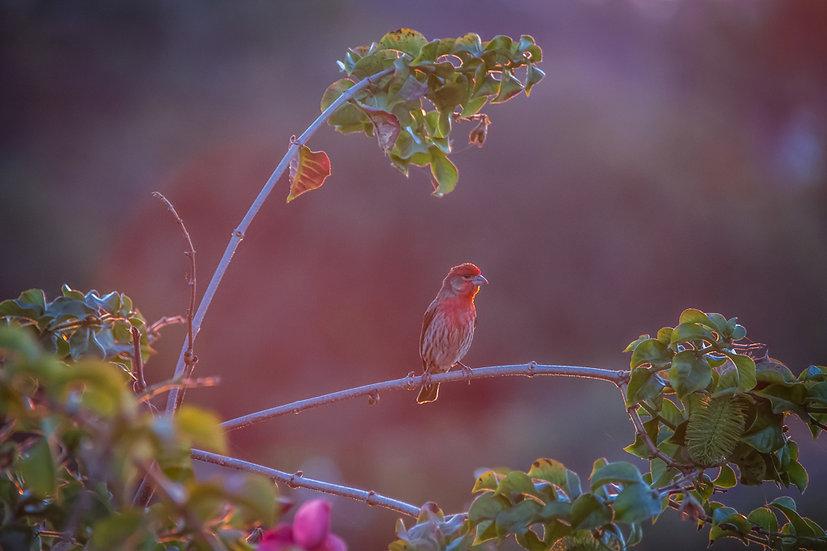 Birds 197