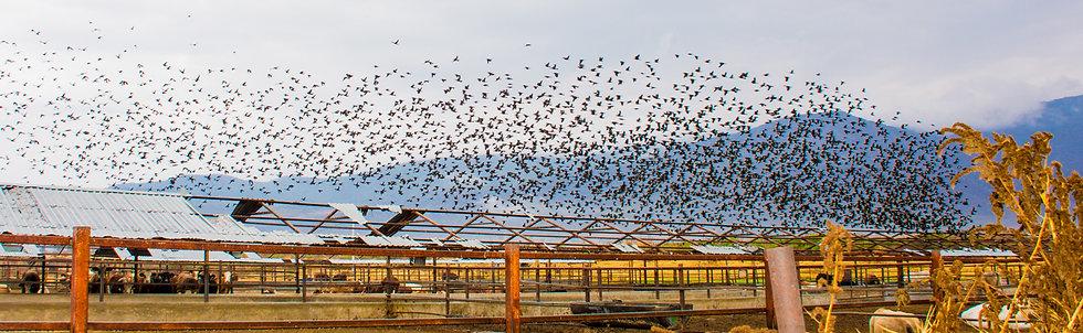 Birds 179
