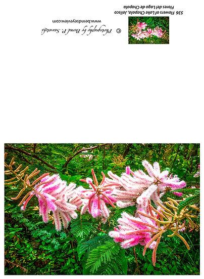 Flowers and blooms in Lake Chapala/ Flores y flores en el lago de Chapala 536