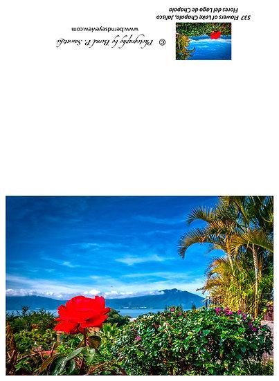 Flowers and blooms in Lake Chapala/ Flores y flores en el lago de Chapala 537