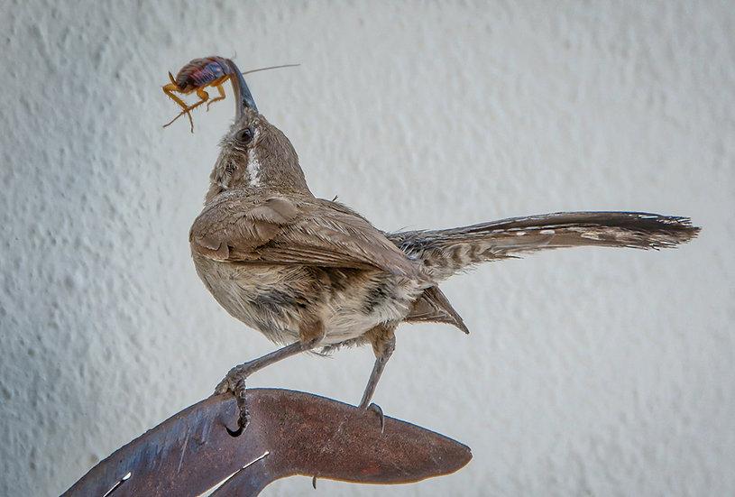 Ready for take off to the nest / Listo para despegar al nido 159