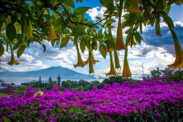 Flowers and blooms in Lake Chapala/ Flores y flores en el lago de Chapala 553