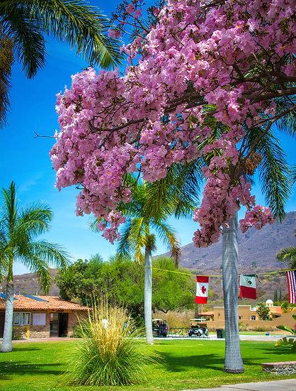 Flowers and blooms in Lake Chapala/ Flores y flores en el lago de Chapala 599