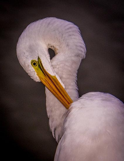 Birds 178