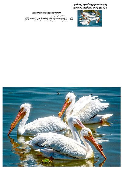 Pelicans in Petatan/Michoacan 117-B8