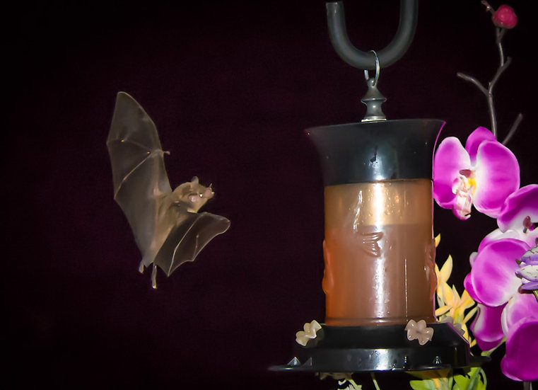 Bat / Bate 166