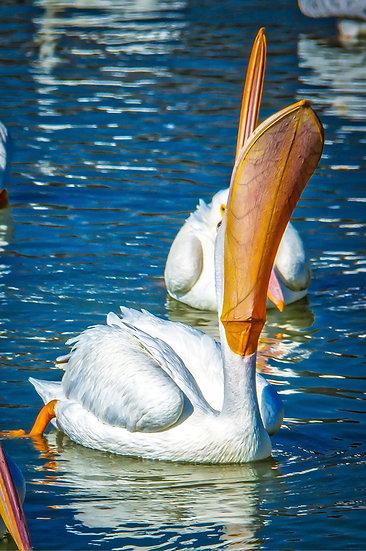 Waiting for the  fish to drop? / ¿Esperando a que caiga el pez volador? 145-B1
