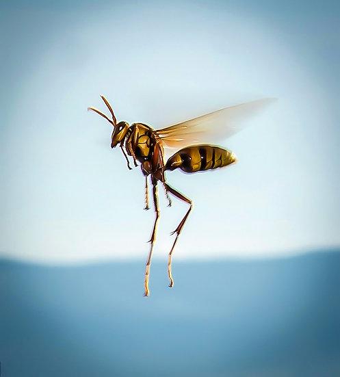 Wasp / Avispa 903
