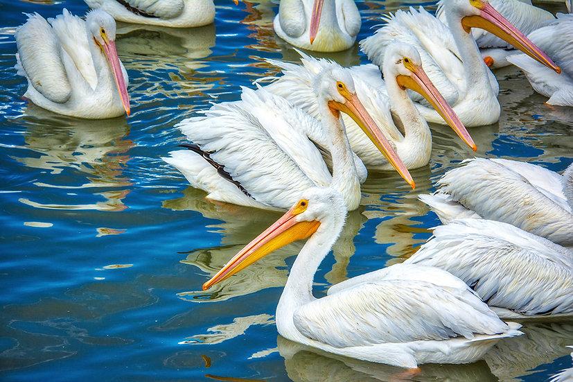Pelican's in Petatan/Michoacan 119-B4