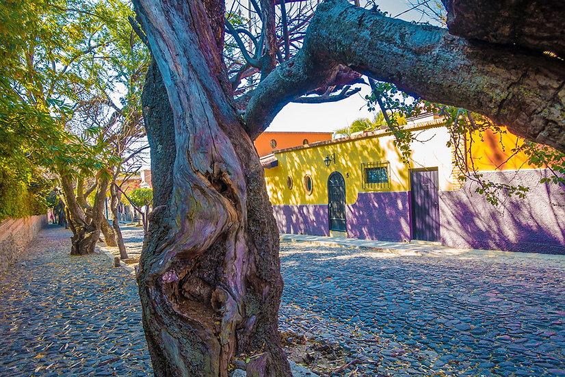 Quiet street in Ajijic / Calle Tranquila en Ajijic 700-Fa4