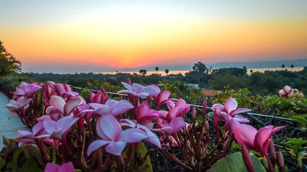 Flowers and blooms in Lake Chapala/Flores y flores en el lago de Chapala 506-A