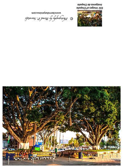 Shady trees in Chapala / Árboles sombríos en Chapala 032