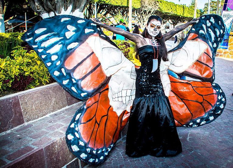 Butterfly, Ixtlahuacan / Mariposa de Ixtlahuacan N-222