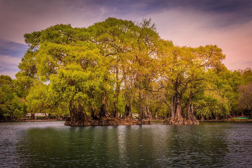Lago de Camécuaro, Michoacan 10-026