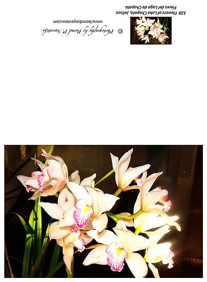 Flowers and blooms in Lake Chapala/ Flores y flores en el lago de Chapala 528