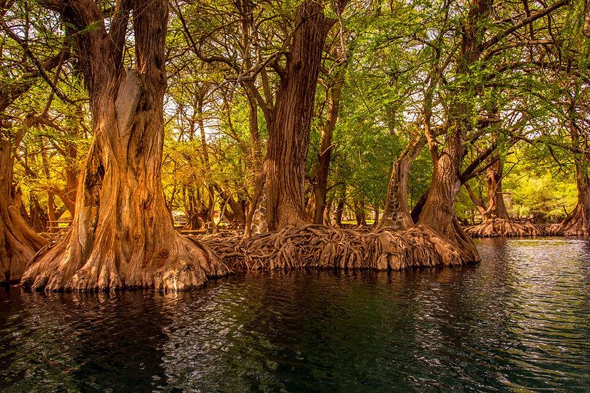 Lago de Camécuaro, Michoacan 10-023